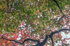 The various dimensions of leaves in autumn Stock Photo