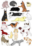 Various dogs postures Royalty Free Stock Photos
