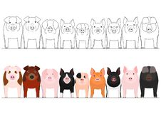 Various domestic pigs in a row. Set of border with and without colors royalty free illustration