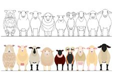 Various domestic sheep in a row. Set of sheep border, Various cute domestic sheep standing in a row stock illustration