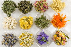 Various dried plants for making perfect tea Royalty Free Stock Image