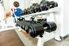 Various dumbbells in gym Stock Images