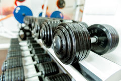 Various dumbbells in gym Royalty Free Stock Photos