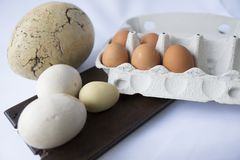 Nine eggs in several white colors and mixed sizes royalty free stock photo