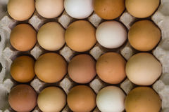 Various eggs in egg trays Royalty Free Stock Photos