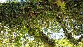 Various Epiphyte on trees Royalty Free Stock Photo
