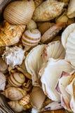 Various Exotic Starfish, Seashell and Cockleshells Piled Togethe Stock Photography