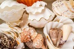 Various Exotic Starfish, Seashell and Cockleshells Piled Togethe Stock Photos