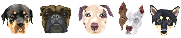 Various face dogs Royalty Free Stock Photography