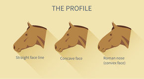 Various face lines of a horse with description Stock Photography