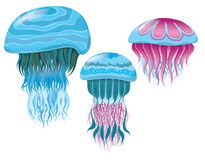 Various fantastic jellyfish Stock Photography