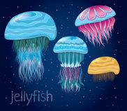 Various fantastic jellyfish Royalty Free Stock Image