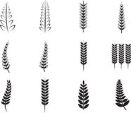 Various ferns icons. On white background Stock Illustration