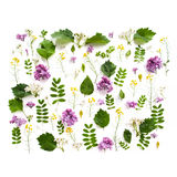 Various field plants and lilac flowers lined with a rectangle on Royalty Free Stock Photography