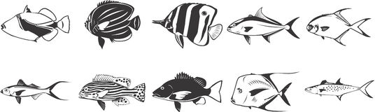 Various Fish. An illustrated background of different fish Royalty Free Stock Photography