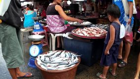Various fish catch are sold at street wet market due to lack of market facilities. Laguna, Philippines - July 19, 2015: Various fish catch are sold at street wet stock footage