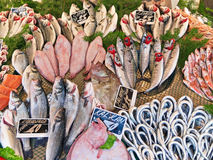 Various fish on the counter fish shop. Stock Images