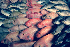 Various fish in the fish market. Various fish in the market Royalty Free Stock Image