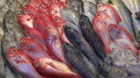Various fish in the market stock footage
