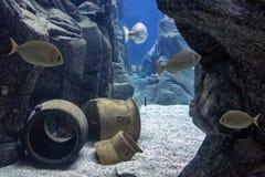 Various fish species at `cretaquarium` in Heraklion, Crete - Greece stock photography
