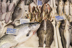 Various fishes on the ice counter at fish market. With price cards Royalty Free Stock Photography
