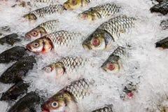 Various fishes at the thailand fish market of samui Stock Photos