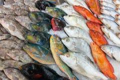 Various fishes at the thailand fish market of samui Royalty Free Stock Photo