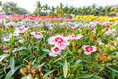 Various flower on garden pubic Royalty Free Stock Images