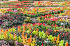 Various flower on garden pubic Stock Photos