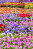 Various flower on garden pubic Stock Image