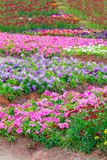 Various flower on garden pubic. Out door royalty free stock images