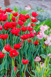 Various flower on garden pubic. Out door royalty free stock photography