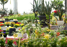 Various Flowering Plants Growing in a Nursery Royalty Free Stock Photography