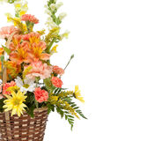 Various flowers arranged on a white background Royalty Free Stock Images
