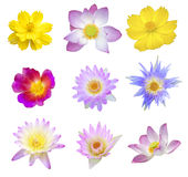 Various flowers Royalty Free Stock Images
