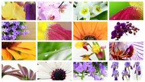 Various flowers collage Royalty Free Stock Images