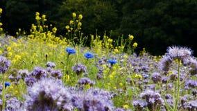 Various flowers on field. Various beautiful flowers on field 4k stock video