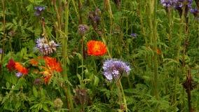 Various flowers on field. Various beautiful flowers on field 4k stock footage