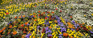 Various flowers in full bloom Royalty Free Stock Image