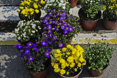 Various flowers market Stock Photography