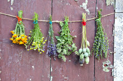 Various flowers and medical herb bunch on wooden grunge wall Stock Photos