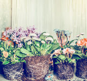 Various flowers for planting in garden or pots Royalty Free Stock Photography