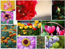 Various flowers set Royalty Free Stock Photos