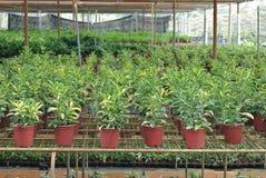 Various flowers and shrub inside nursery Royalty Free Stock Photo