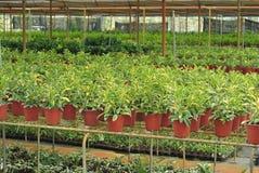 Various flowers and shrub inside nursery Stock Photography