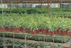 Various flowers and shrub inside nursery Stock Image
