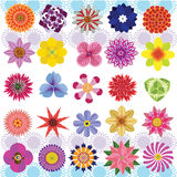 Various Flowers. Vector of Various Flowers Isolated on White Background Royalty Free Stock Photography