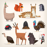 Various forest animals Royalty Free Stock Images