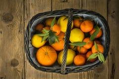 Various fresh citrus fruits in basket Royalty Free Stock Image