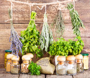 Various fresh and dried herbs Stock Photos